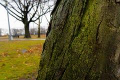 Nebenwirkung des Parks lizenzfreie stockfotos