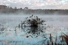 Neblina na lagoa Stock Images