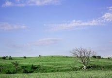 NEBRASKA LANDSCAPE. Nebraska grassland with old tree Royalty Free Stock Images