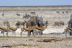 Nebrownii waterhole Stock Photos