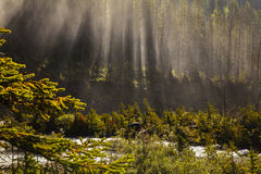 Nebular forest near takakkaw falls, yoho national park british columbia, canada Royalty Free Stock Image