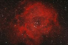 nebularosette arkivfoto