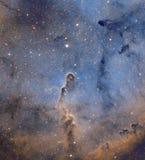 Nebulosa do tronco do elefante foto de stock royalty free