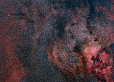 The Nebulosity of Cygnus Royalty Free Stock Photo