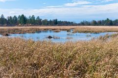 Necedah Sedge Meadow Wetlands and Forest Stock Images