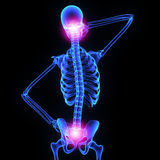 Neck and hip joint Stock Image