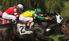 Neck and Neck Horse Race Royalty Free Stock Photography