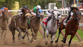 Neck and Neck at the Top of the Stretch. SARATOGA SPRINGS, NY - AUG 28: A field of thoroughbreds heads down the stretch in a claiming race at Saratoga Race stock image
