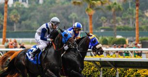 Neck and Neck Horse Race Stock Photography
