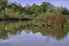 Neckar wetlands royalty free stock photo