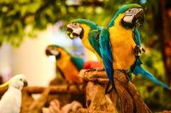 Necked попугай стоковое изображение