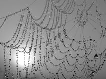 Necklace. Morning dew on a web stock photo