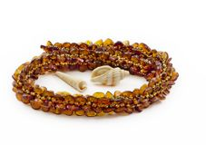 Necklace of Baltic amber and shellfish Royalty Free Stock Images