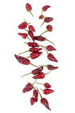 Necklace of dried Portuguese peppers on white background Royalty Free Stock Photos