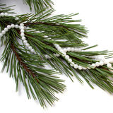 Necklace on fir tree. Royalty Free Stock Photo