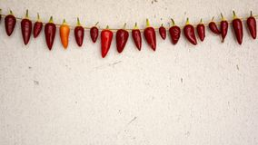 Necklace of fresh ripe chili pepper hanging to dry in the sun on a string. Gas Concrete wall in background royalty free stock images