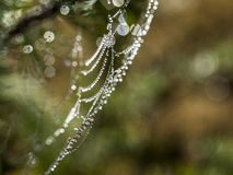 Necklace of glitter cobweb. At background stock photography