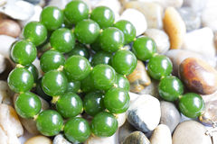Free Necklace Green Agate Royalty Free Stock Photos - 40521068