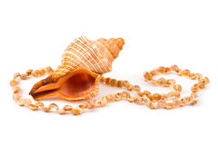 Necklace made of sea shell Royalty Free Stock Photography