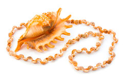 Necklace made of sea shell Royalty Free Stock Photo