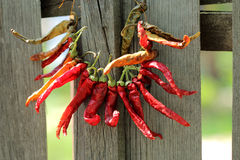 Necklace of red pepper. Bunch of dried hot pepper hanging on a wooden fence Stock Photos