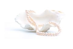 Necklace in shell Royalty Free Stock Photo