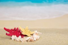 Necklace and starfishes Royalty Free Stock Image