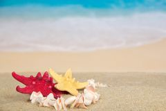 Necklace and starfishes on the sea coast Stock Image