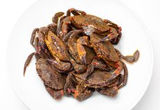 Necoras gallegas from Galicia. Delicious seafood from the Bay of Biscay and Atlantic. Fresh and alive crabs isolated on white ba. Galician Necoras from Galicia stock photo
