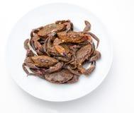 Necorasgallegas van Galicië Heerlijke zeevruchten van de Golf van Biskaje en de Atlantische Oceaan royalty-vrije stock foto