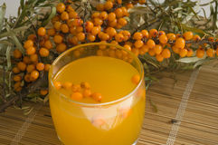 Nectar from berries of sea-buckthorn berries. The Image of a glass with juice against sea-buckthorn berries branch Stock Photography