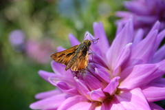 Nectar d'Ooh Image stock