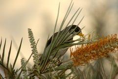Nectar de matin Image stock