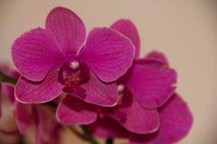 Nectar de séduction Image stock
