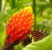 Nectar doux Photos libres de droits