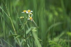 Nectar en vlinder Royalty-vrije Stock Foto