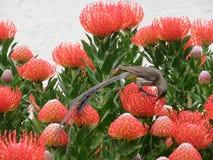 Nectar Feast Royaltyfria Foton