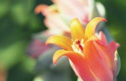 Nectar Flower Imágenes de archivo libres de regalías