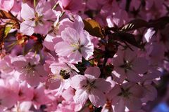 Nectar of the fruit trees attracts many insects Stock Photo