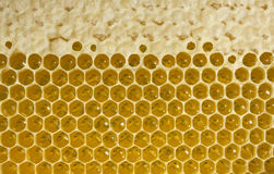 Nectar and honey in new comb. Bees nectar poured into new comb to convert it into honey Stock Images