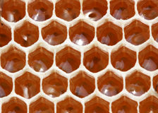 Nectar and honey pantry. Honeycombs of bee create from wax. In them they put nectar, pollen and medical Stock Images