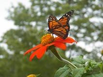 Nectar Nourishment! Fotografia Stock