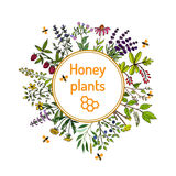 Nectar sources for honey bees. Plants - nectar sources for honey bees. Vector set Royalty Free Stock Photography