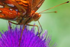 Nectar Time Royalty Free Stock Photo