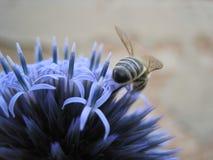 nectarcollector Стоковые Изображения RF