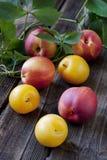 Nectarina e ameixas na tabela de madeira em um estilo rústico Imagem de Stock Royalty Free