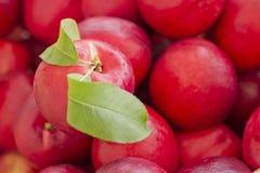 Nectarina roja orgánica imagenes de archivo