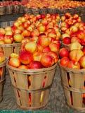 Nectarinas en celemines Fotos de archivo libres de regalías