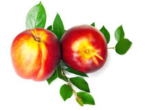 Nectarine. With green leaves over white background royalty free stock image