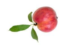 Nectarine Stock Images